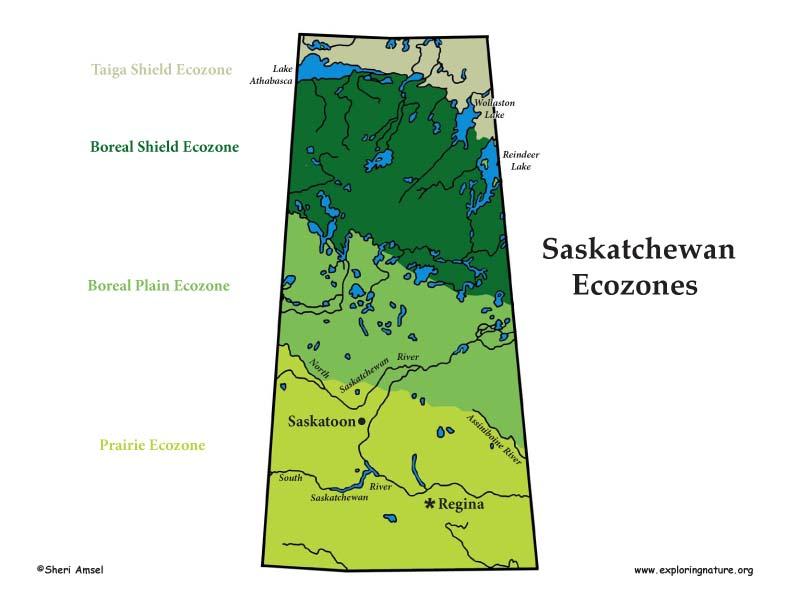 Canadian Province - Saskatchewan ecozones