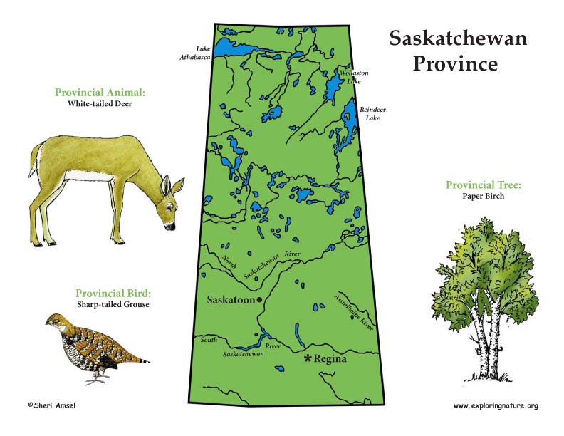 Canadian Province - Saskatchewan map