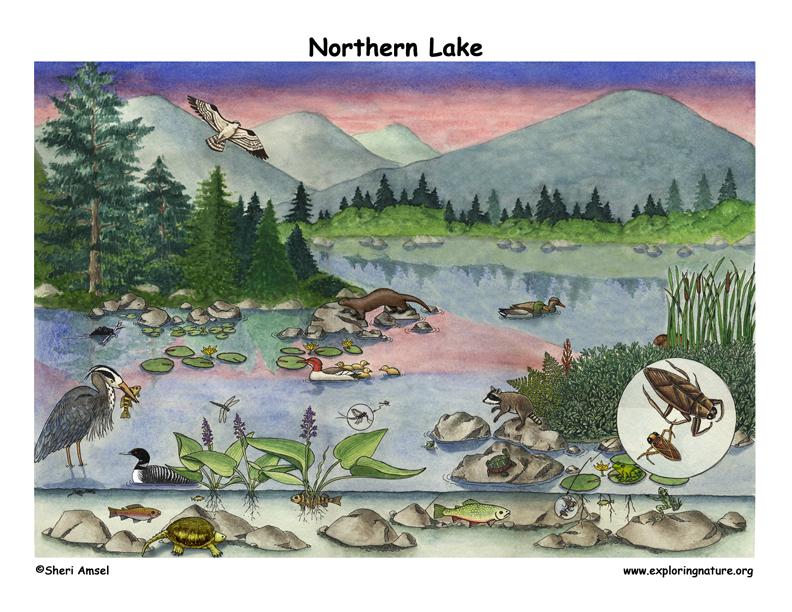 Lake biome