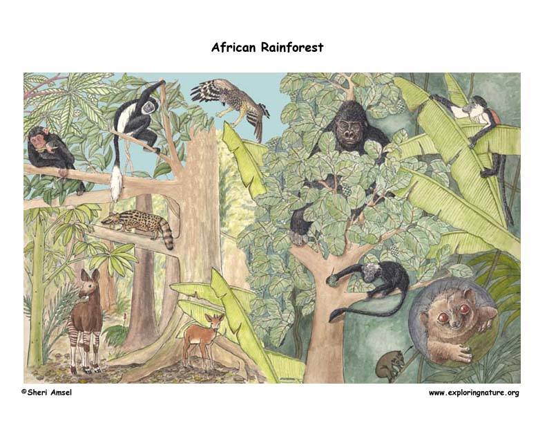 African rainforest Biome