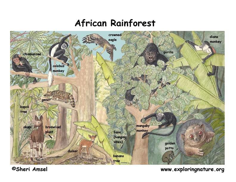 African Rainforest Plants List The African Rainforest