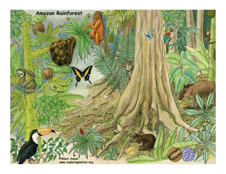 amazon rainforest Biome