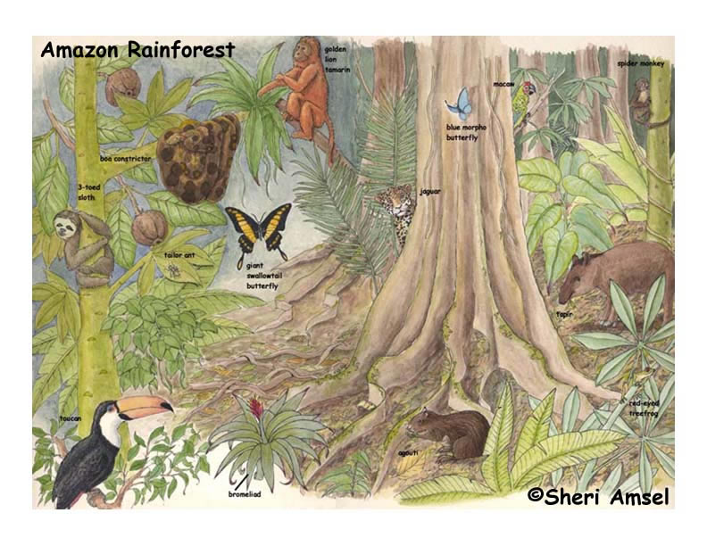 Amazon Rainforest Poster
