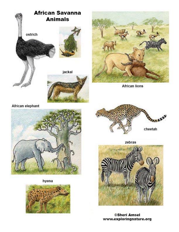 Acacia Tree | Bäume zeichnen, Malvorlage eule, Afrika tiere | 792x612