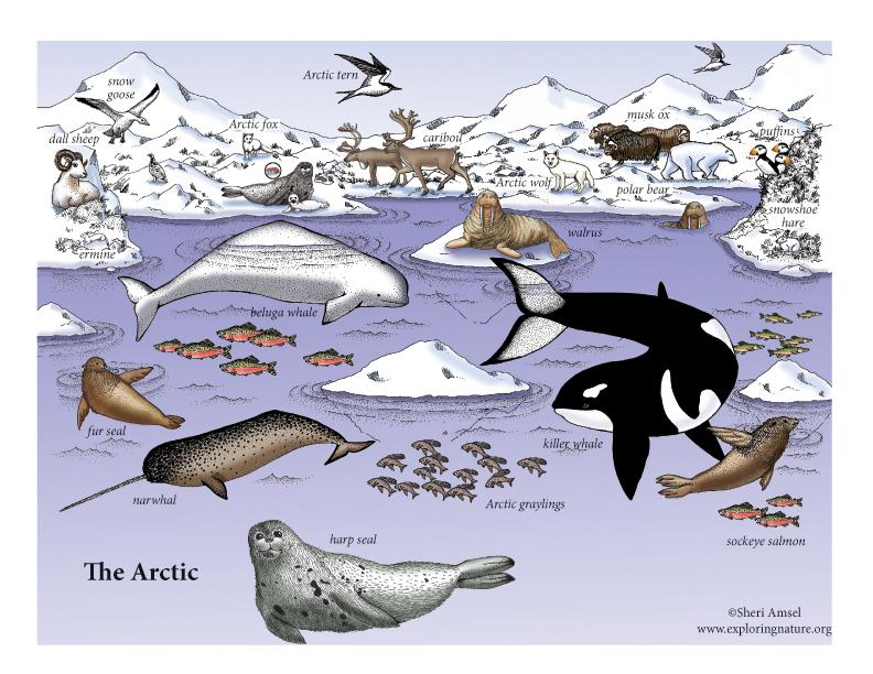 Arctic Tundra biodiversity model