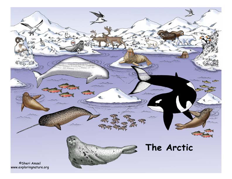 The Arctic and the Tundra