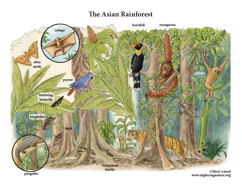 The Rainforests of Asia