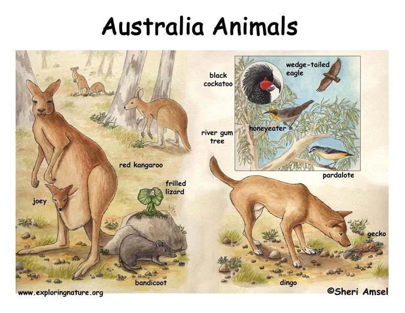 Australian Desert Scene with Species Named