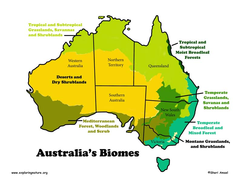 biomes of australia Biomes and ecosystems developing the capacity to identify and describe the major biomes of australia and the world, and explaine their spatial distribution.