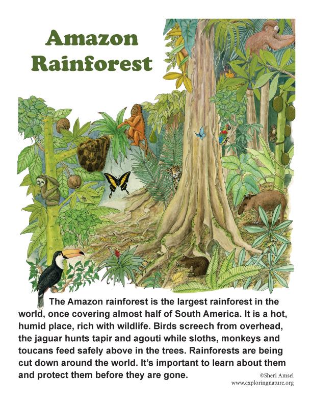 Amazon Rainforest Posters