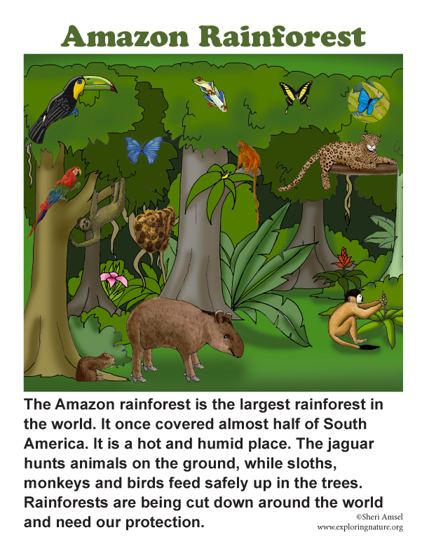 rain forest biome essay example Tropical rainforest biome  the climate of the rainforest is warm most of the year  and has a lot of rain through  the climate is perfect for animals and plant growth   who use hamburger from cows who grazed on rainforest land, for example.