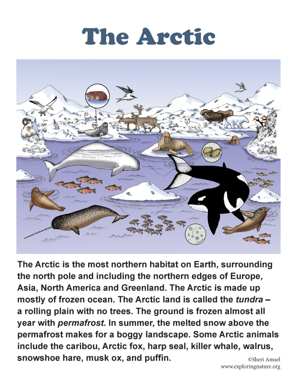 Arctic poster for grades 3-5