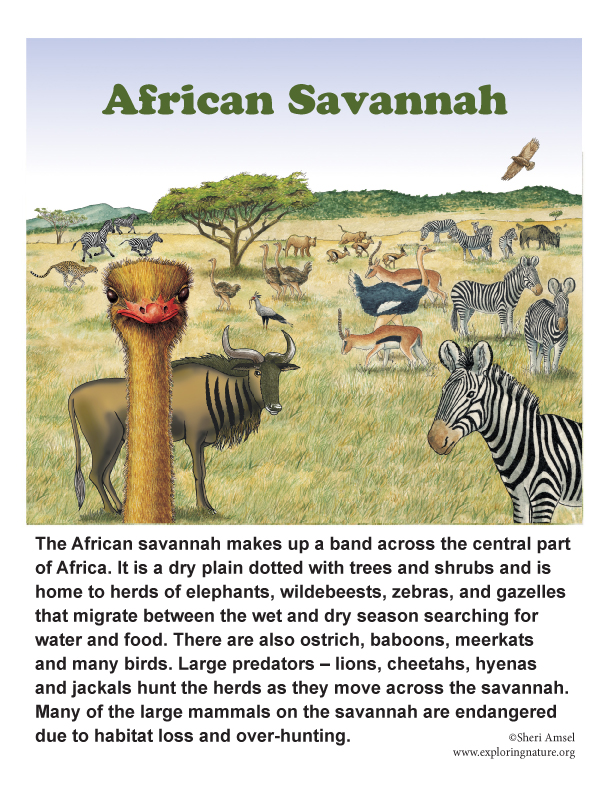 African Savannah Poster