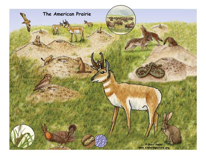 Prairie Biome