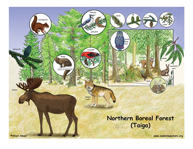 Forest ecosystem animals - photo#8