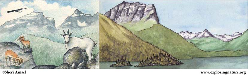 Canada Animals, Habitats and Symbols