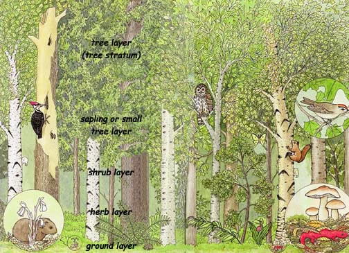 an analysis of the characteristics of the deciduous forest biome Most of the deciduous forests have now disappeared but many of the trees still grow in deciduous forest biome the types of trees you can find in these three regions are broad leafed deciduous trees and some of the evergreen species.
