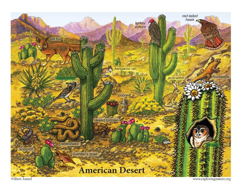 North American Desert Posters, sonoran desert posters