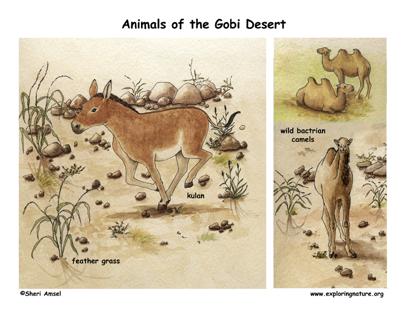 Gobi Desert Scene with Species Named
