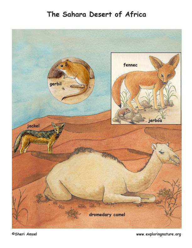 Sahara Desert Scene with Species Named