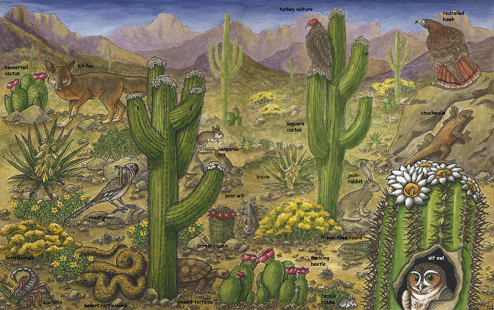 Deserts of North America -- SonoranDesert Biome Plants