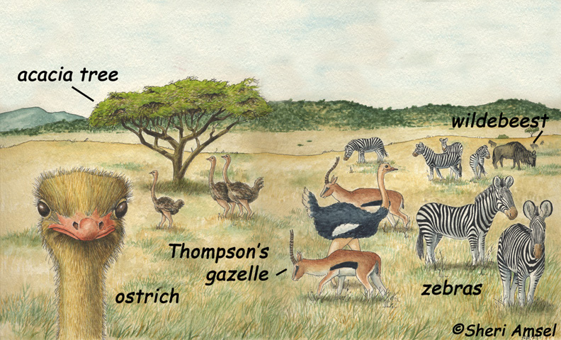 Grassland animals and plants food web - photo#21