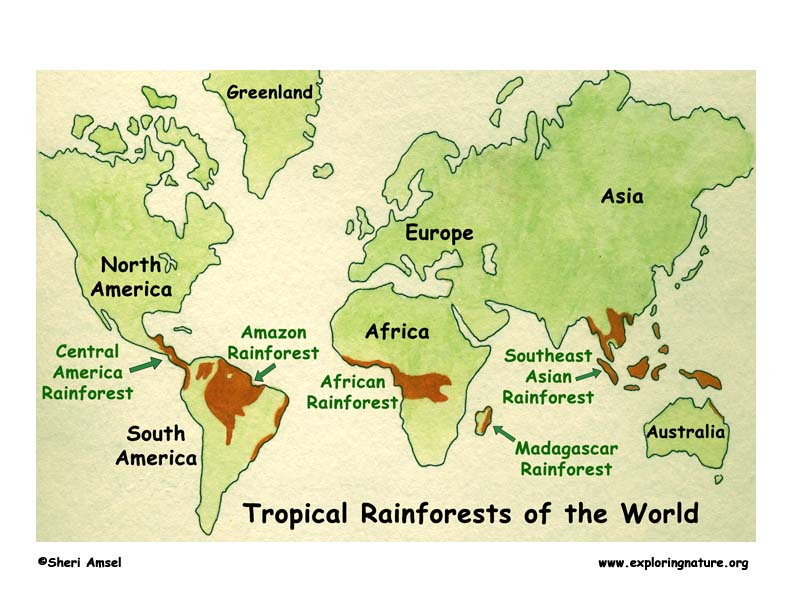 About Rainforests