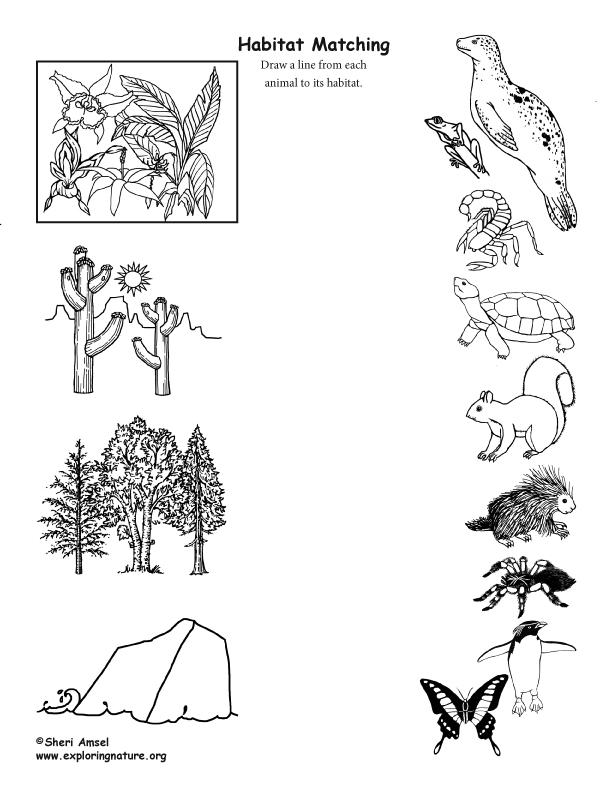 Animal habitat Matching (Black and White)