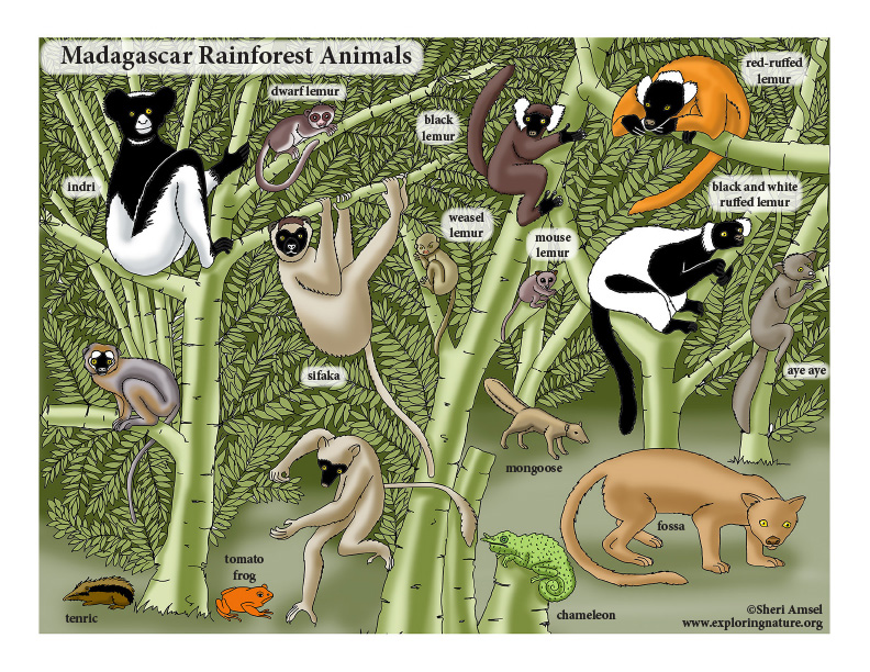 Madagascar Rainforest Poster