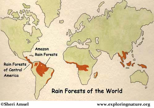 Amazon Rainforest of South America