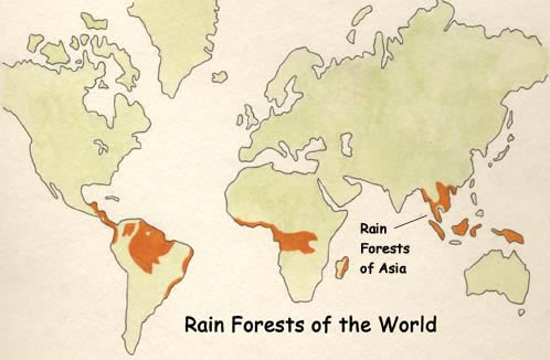 That would southeast asian rain forest 3012