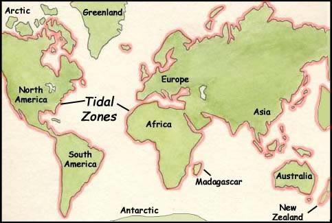 The Intertidal Zones Tide Pool Habitat