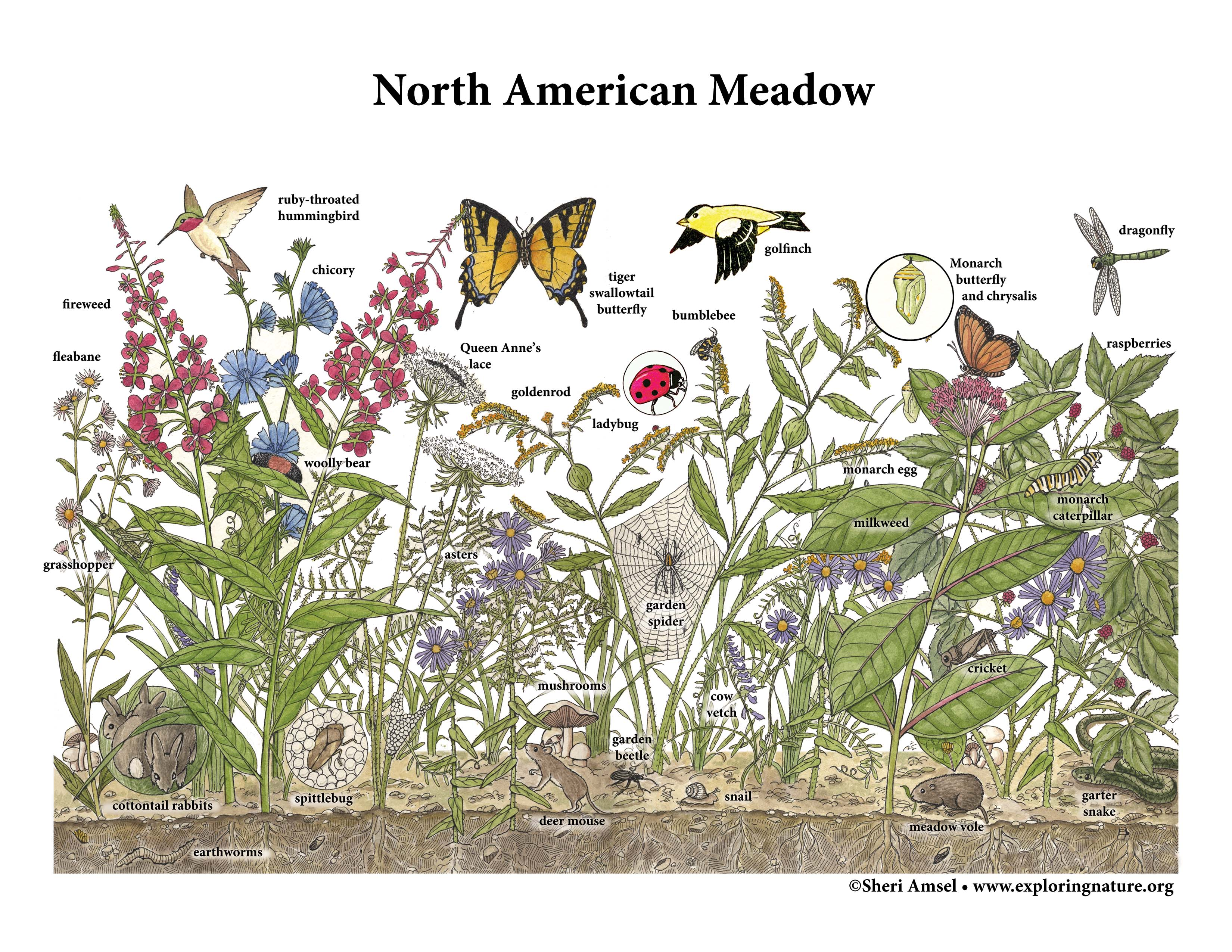 Meadows of Eastern North America
