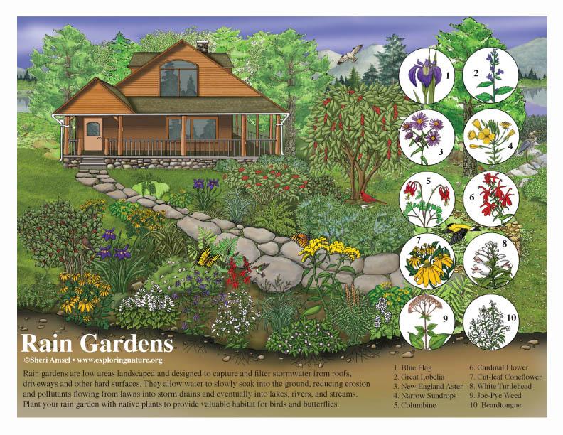Rain Garden Poster