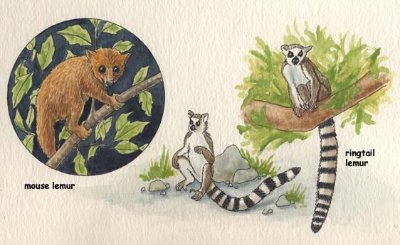 The Rainforest of Madagascar