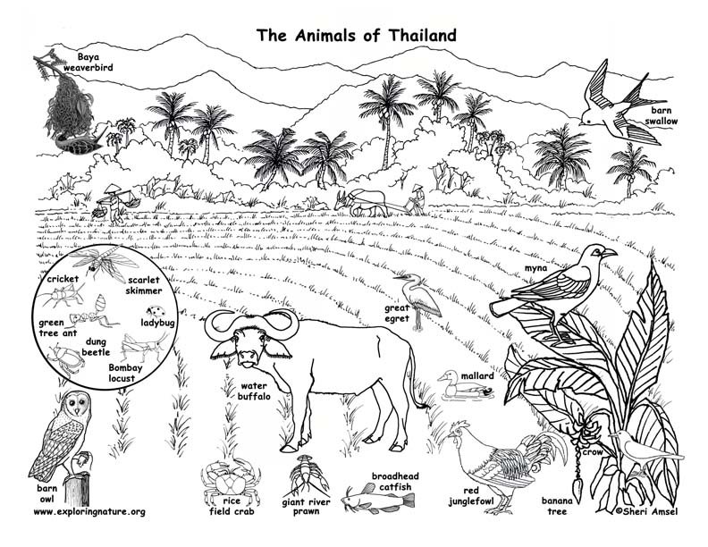 Thailand Ausmalbilder - Ultra Coloring Pages | 612x792