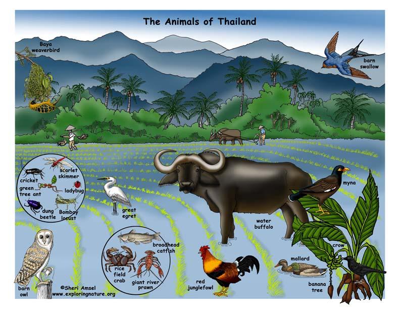 Thailand - Habitats, Animals and Activities