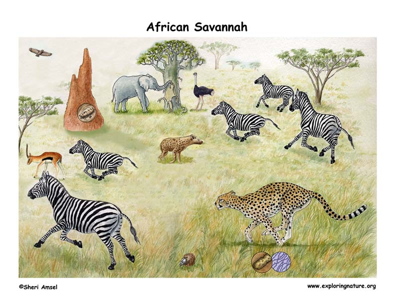 African savannah Biome