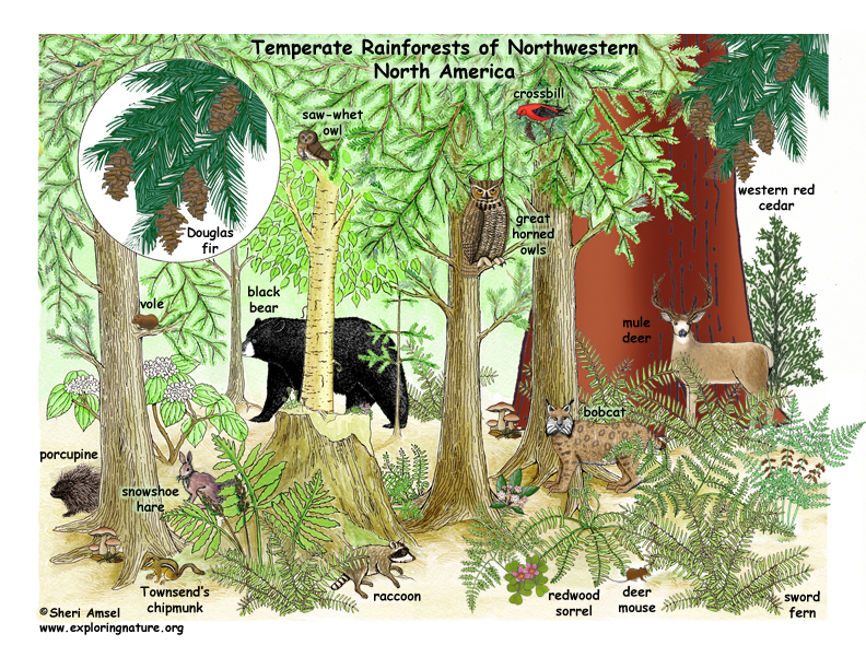 Adaptive features of plants and animals in the forest