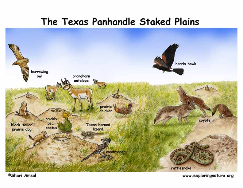 Pecos and Staked Plains of the Texas Panhandle
