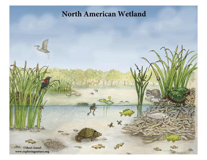 North American Wetland