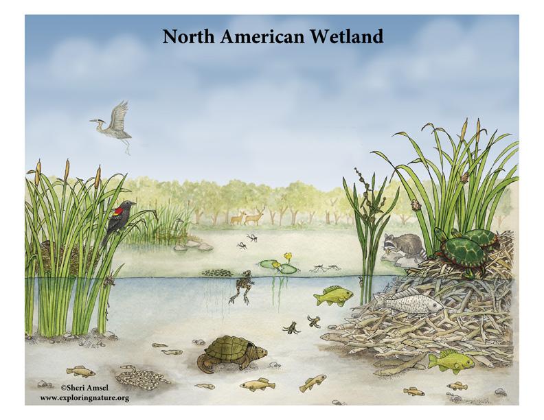 North American Wetland