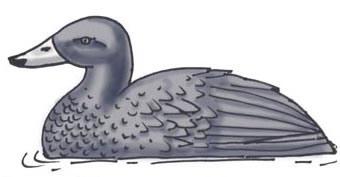 Duck (Blue)
