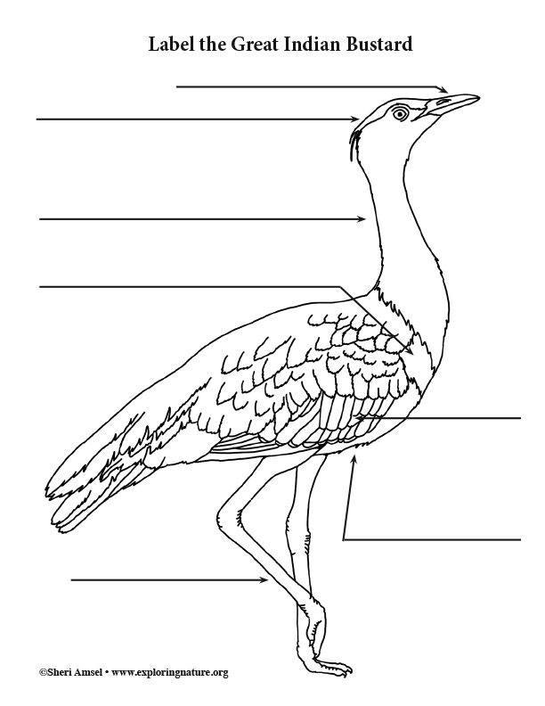 Great Indian Bustard Labeling Page