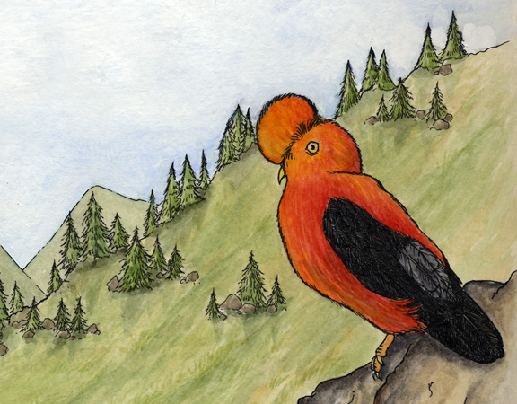 Cock-of-the-Rock