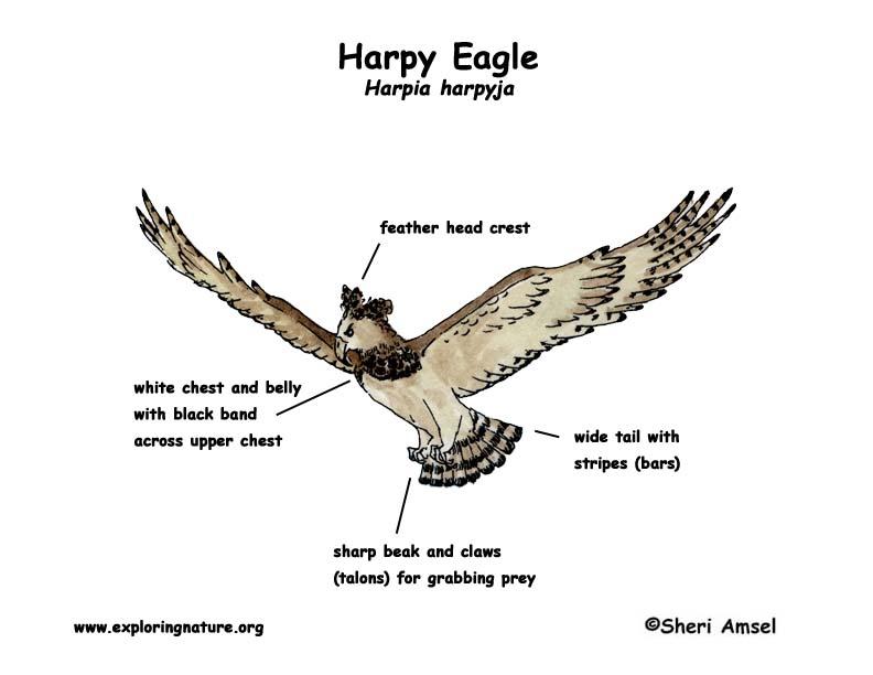 Eagle Body Parts Diagram Schematics Wiring Diagrams