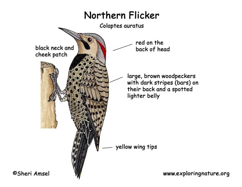 flicker  northern