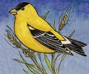 Goldfinch (American)