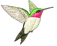 Hummingbird (Ruby-throated)