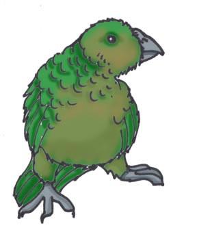 Kakapo (Night Parrot)
